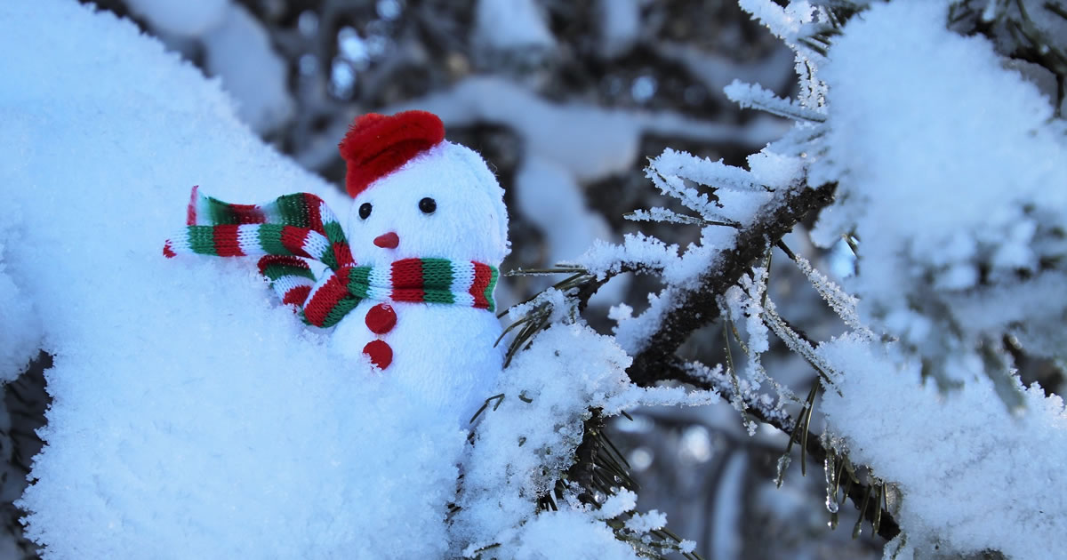 Photo: small snowman in tree branch
